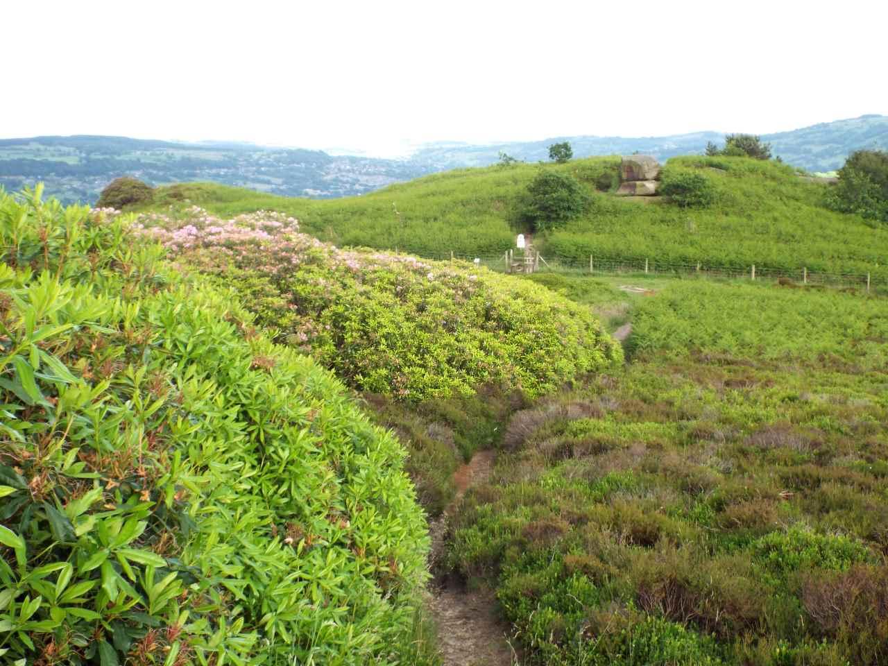 Good walking territory on Stanton Moor